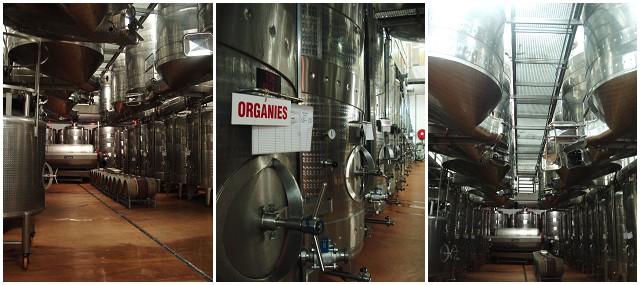 Avondale Wine cellar