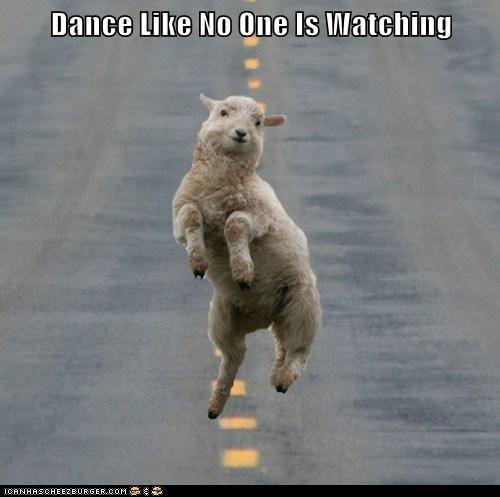 skaap dans